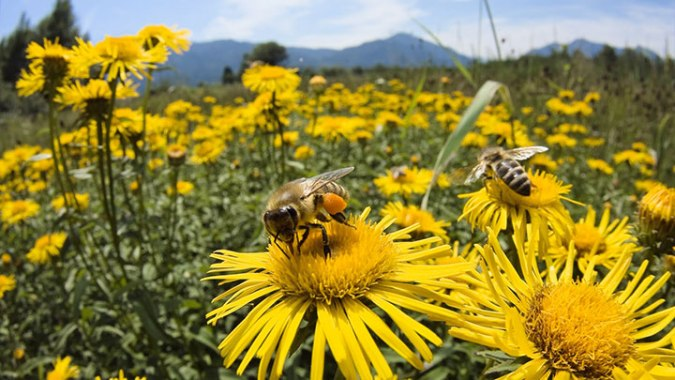 bee-insect-robots-for-cross-pollination-14